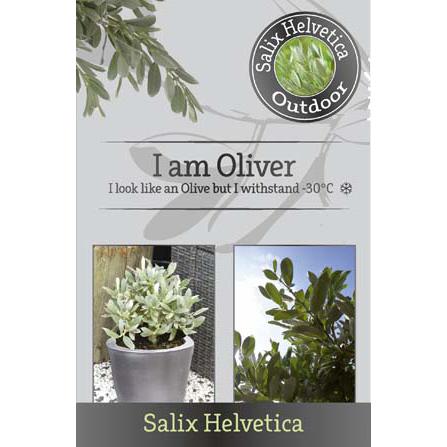 'I am Oliver'